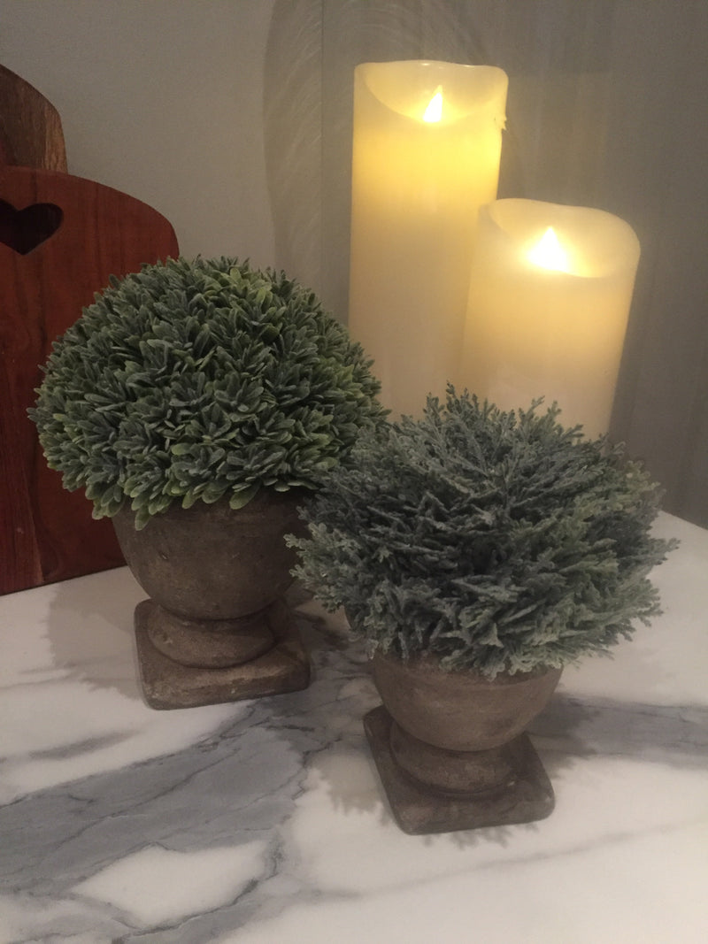 Parlane Potted Boxwood