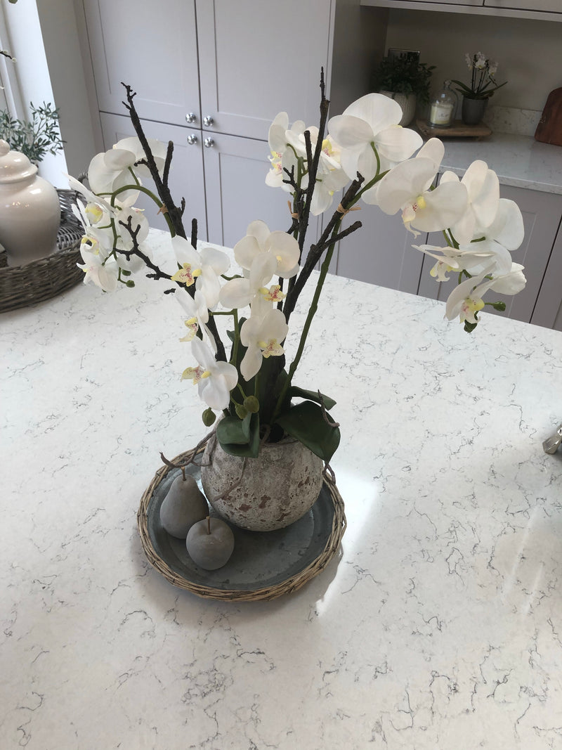Large White tall orchid in stone pot