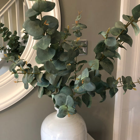Variegated eucalyptus stem