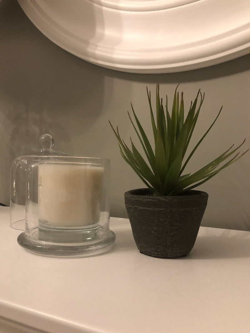 Potted Faux Airplant