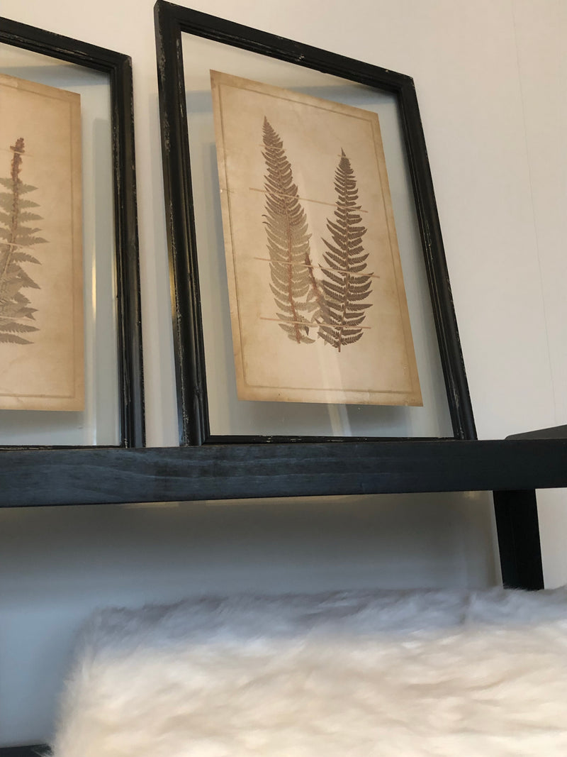 Set of two fern prints in black frames