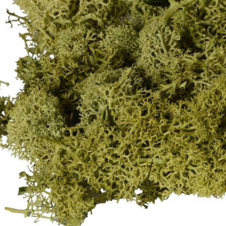 Bag of real dried green moss