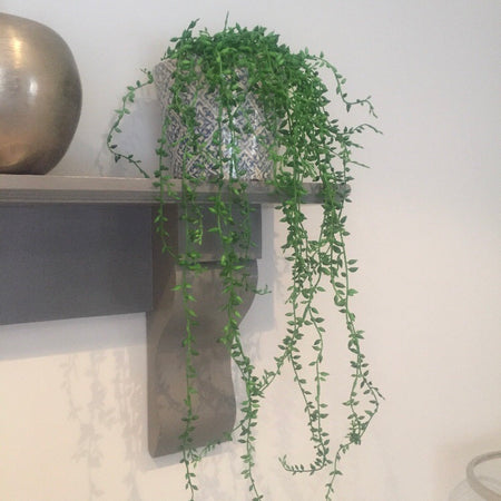 Long Senecio string