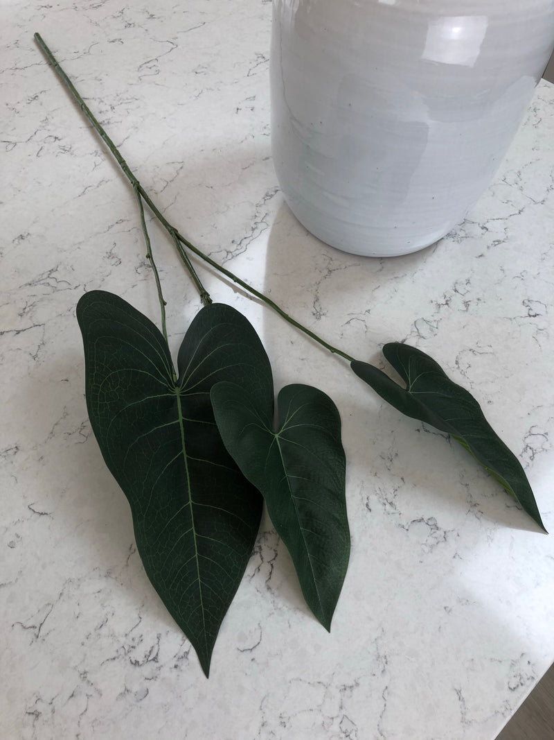 Green natural Philadendron spray stem