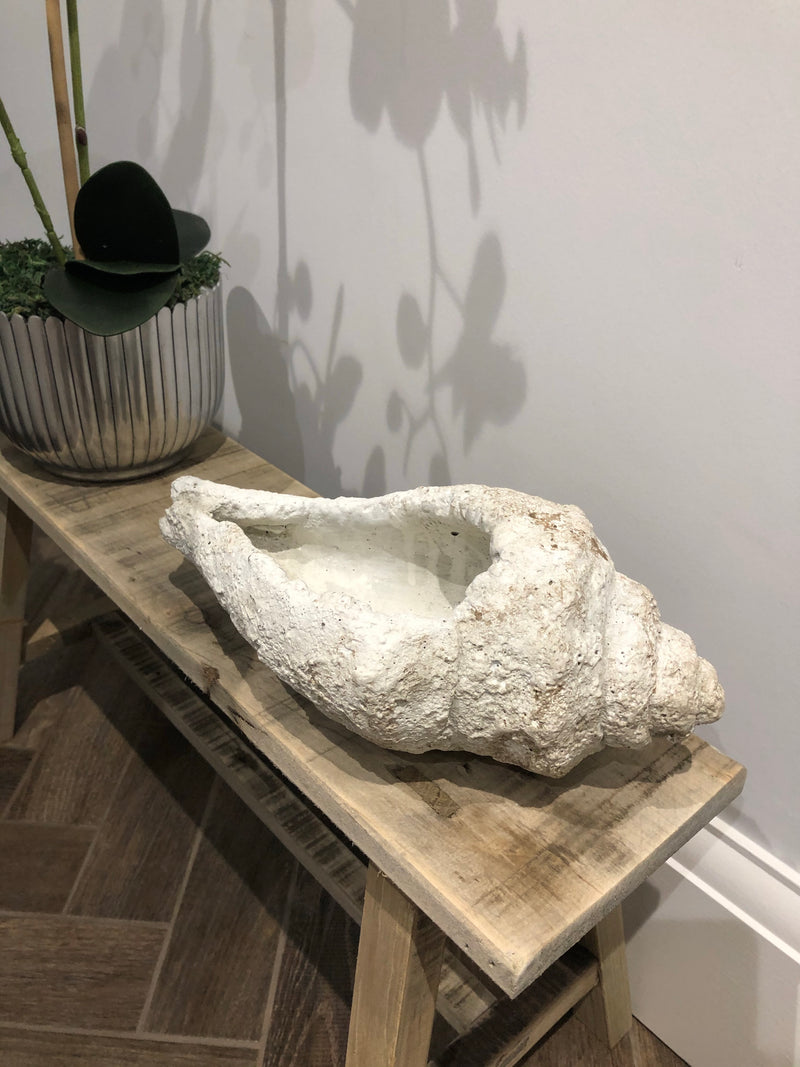 Large Conch decorative shell