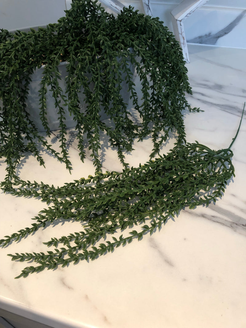 Senecio string branch