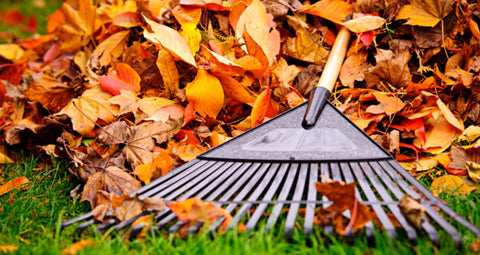 fall cleanups