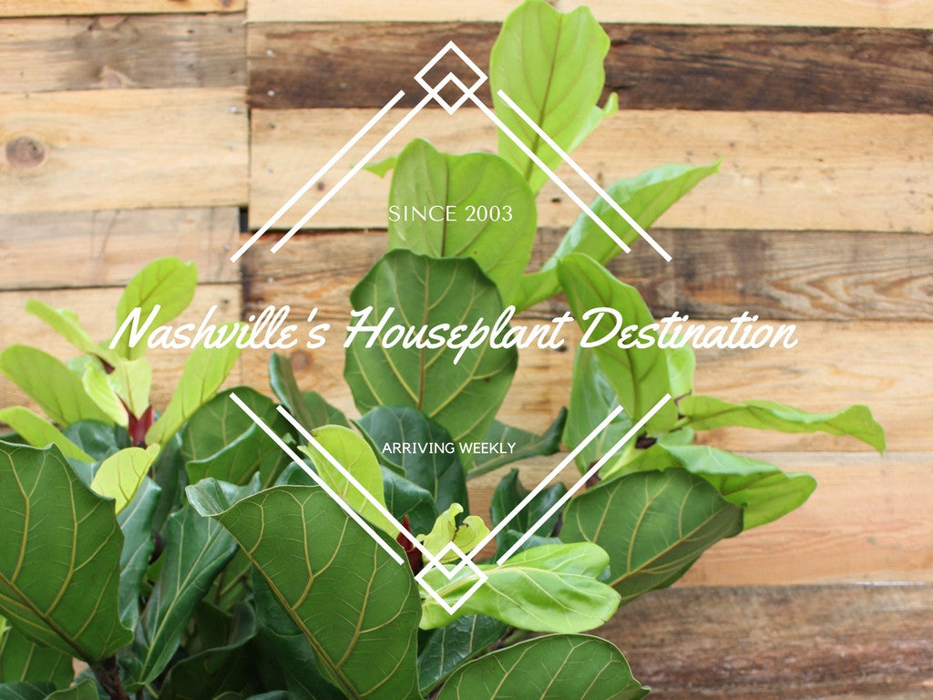 Nashville's Houseplant Destination