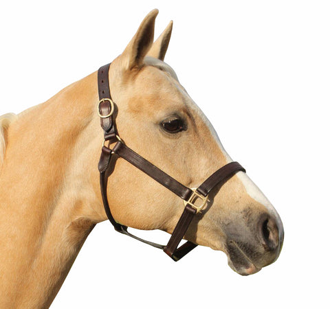 Brass Fitting Shalimar Leather Halter