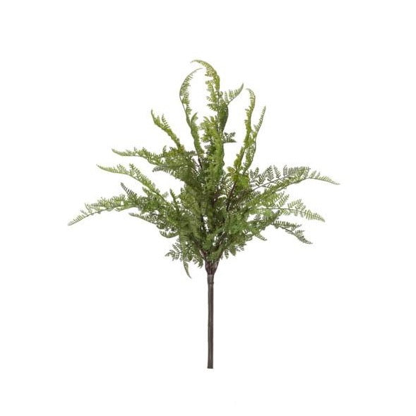 Lace Fern Bush - Home Smith