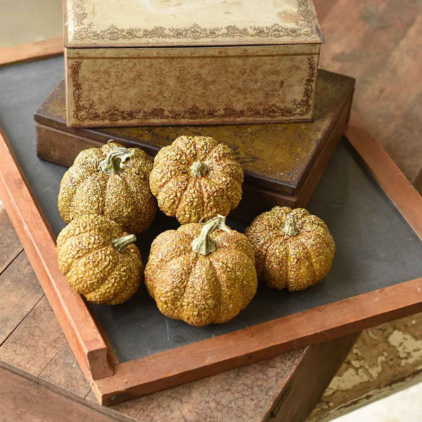 Furrowed Fields Pumpkins - Set of 5 - Home Smith