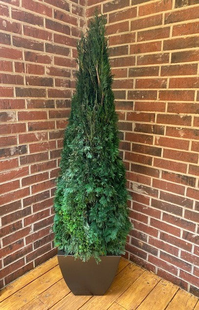 "Preserved Emerald Green Arborvitae - 30"" - Home Smith"