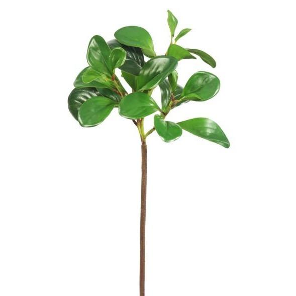 Baby Rubber Tree Branch-Winward-Home Smith