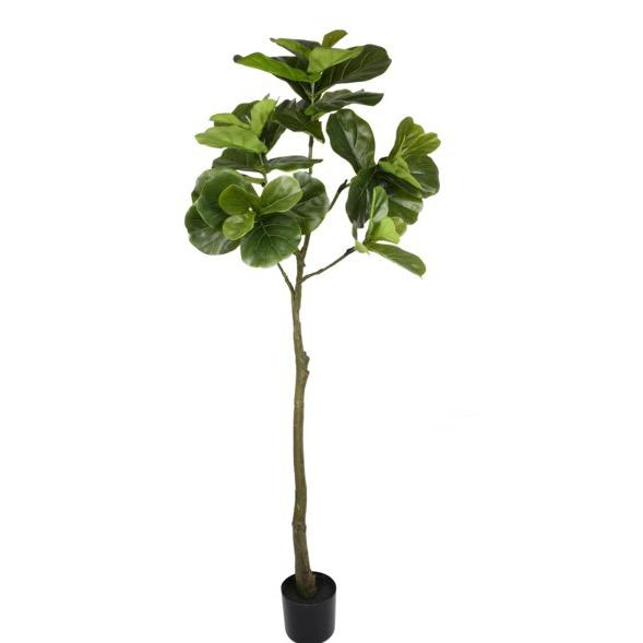 Fiddle Leaf Fig Tree - Home Smith