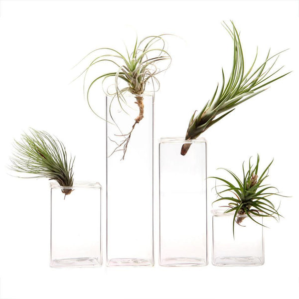 Hudson Glass Cube Vases - Home Smith