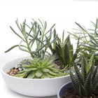 Moog Succulent Dish - Home Smith