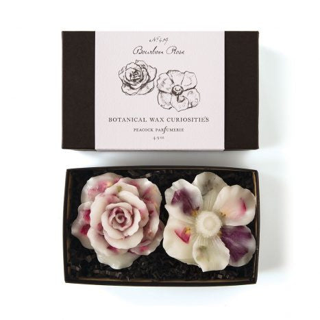 Wax Curiosities - Bourbon Rose Flowers