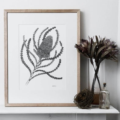 Limited Edition Banksia Victoriae Print by Paula Zetlein