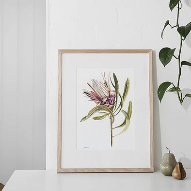 Limited Edition Coloured Protea Print by Paula Zetlein