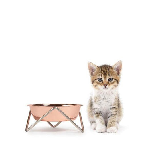 Meow cat bowl -copper on chrome