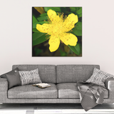 Yellow Rose of Sharon Canvas Wall Art - Square - 4 Sizes
