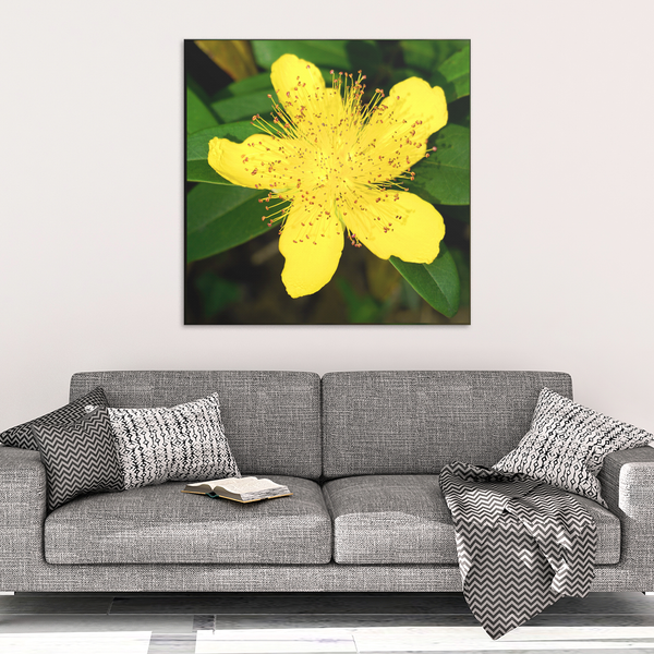 Yellow Rose of Sharon Canvas Wall Art - Square - 4 Sizes - Mind Body Spirit