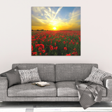 Red Poppies at Sunset Canvas Wall Art - Beautiful Fine Art - 4 Sizes - Mind Body Spirit