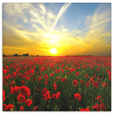 Red Poppies at Sunset Canvas Wall Art - Beautiful Fine Art - 4 Sizes