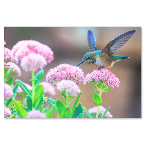 Blue Hummingbird in Garden Canvas Wall Art - Pretty Hummingbird on a Lovely Day in 4 Sizes - Mind Body Spirit