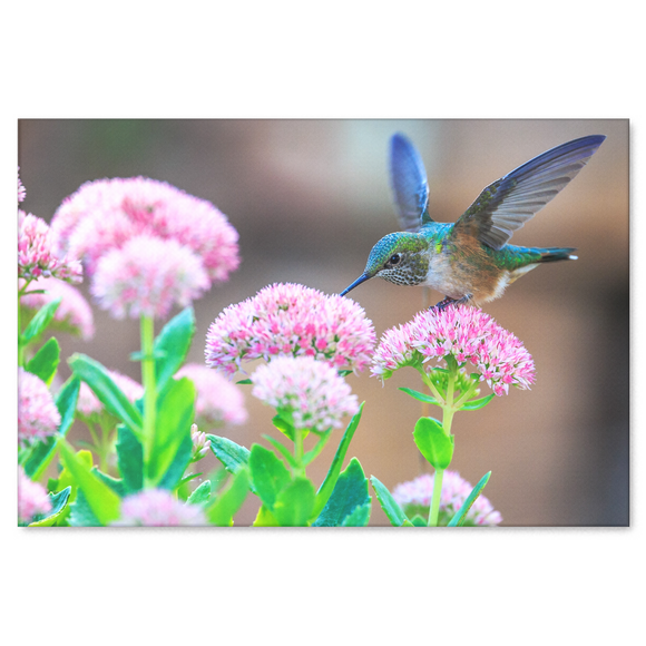 Blue Hummingbird in Garden Canvas Wall Art - Pretty Hummingbird on a Lovely Day in 4 Sizes