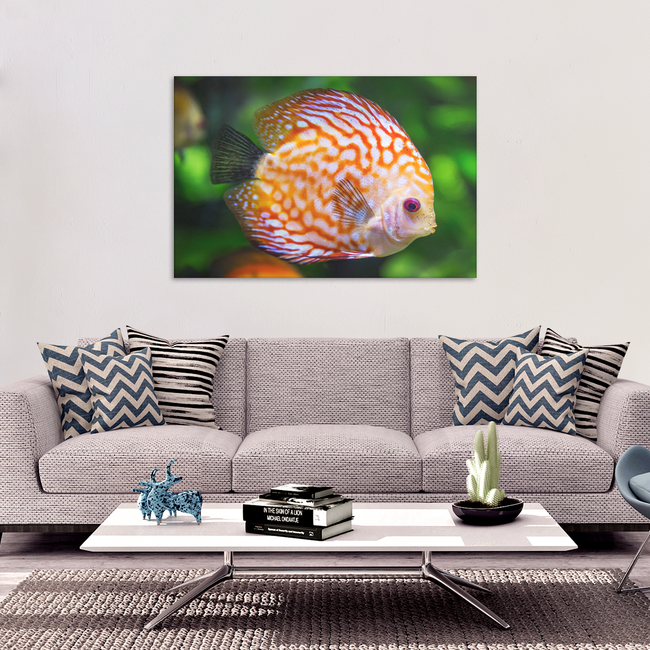 Orange Discus Fish Canvas Art - Stunning Design in 4 Sizes, 8 x 12, 16 x 24, 20 x 30, 24 x 36, - Mind Body Spirit