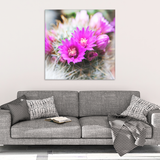 Vibrant Pink Cactus Flower Canvas Wall Art in 4 Sizes; 8x8, 16x16, 24x24, 40x40