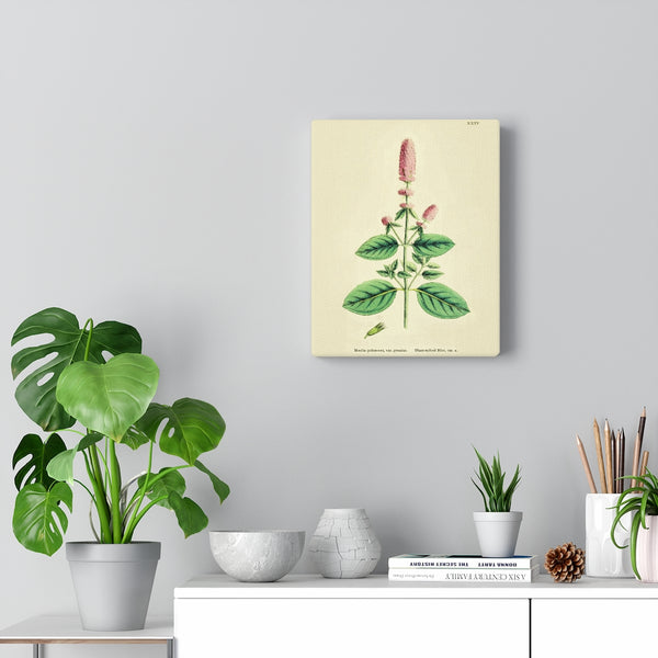 Blunt Spiked Mint English Botanical 1800's Premium Canvas Wall Art Gallery Wrap 3 Sizes