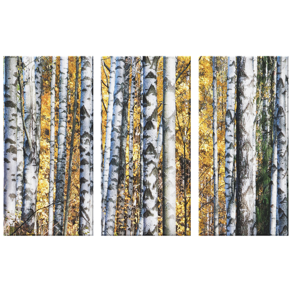 Birch Grove Fall Leaves Pine Background Triptych Awesome 3 Panel Custom Canvas Wall Art, 3 Sizes, Organic Natural Feature, Living Room, Family Room, Den, Office, Bedroom,