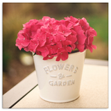 Red Hydrangea Flower Pot Canvas Wall Art in 4 Sizes; 8x8, 16x16, 24x24, 40x40