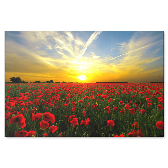 Red Poppies At Sunset Canvas Art - Beautiful Fine Art Available in 4 Sizes,