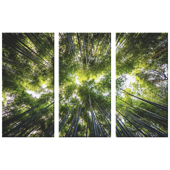 Light Through The Trees Beautiful Triptych  Nature 3 Panel Canvas Wall Art, Living Room, Family Room, Den, Office, Bedroom, 3 Sizes