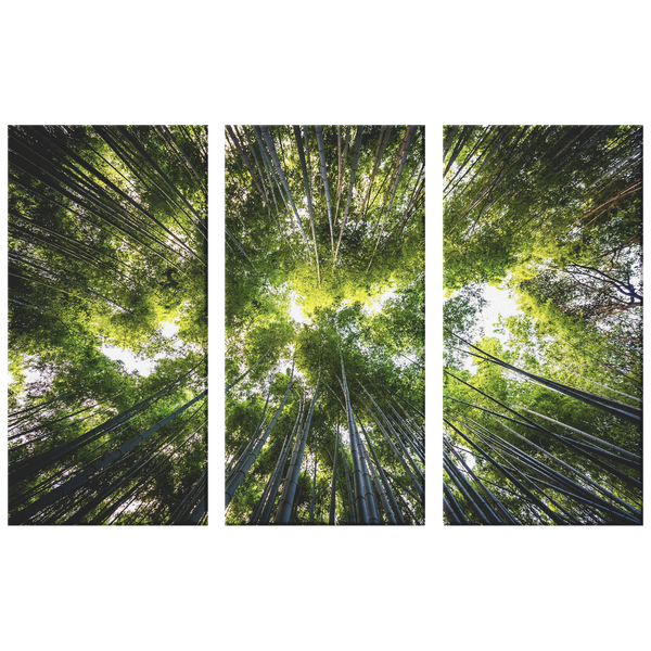 Light Through The Trees Beautiful Triptych  Nature 3 Panel Canvas Wall Art, Living Room, Family Room, Den, Office, Bedroom, 3 Sizes - Mind Body Spirit