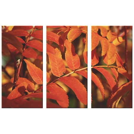 Birch Grove Fall Leaves Pine Background Triptych Awesome 3 Panel Custom Canvas Wall Art, 3 Sizes