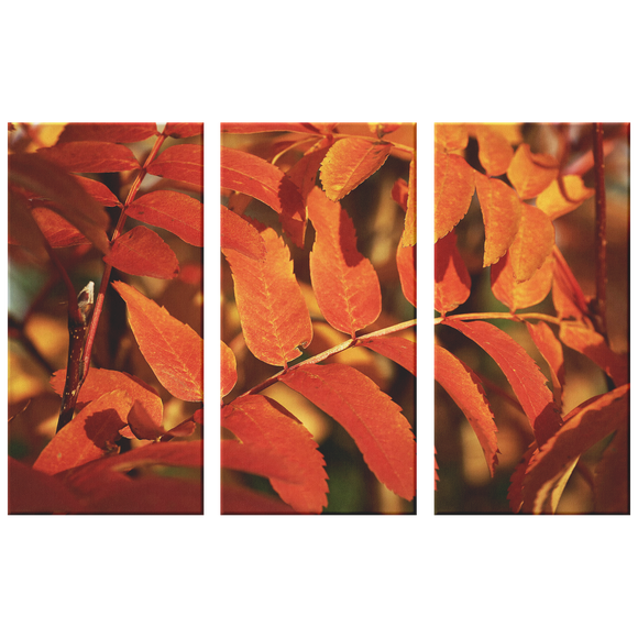 Red Orange Ash Leaves in Fall Triptych  Amazing 3 Panel Canvas Wall Art, 3 Sizes, Fall, Organic,Nature,Living Room, Family Room, Bedroom, Den, Office,