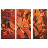 Red Orange Ash Leaves in Fall Triptych  Amazing 3 Panel Canvas Wall Art, 3 Sizes, Fall, Organic,Nature,Living Room, Family Room, Bedroom, Den, Office, - Mind Body Spirit