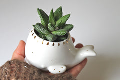 Porcelain mini whale succulent planter with 22k Gold accent