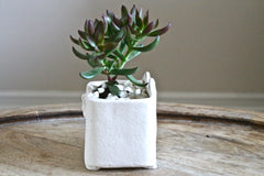 Pilou The Stoneware Cat Succulent Planter