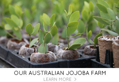 Our Jojoba Farm