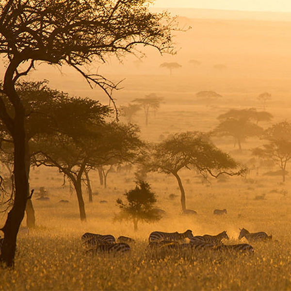 beautiful landscape of Africa