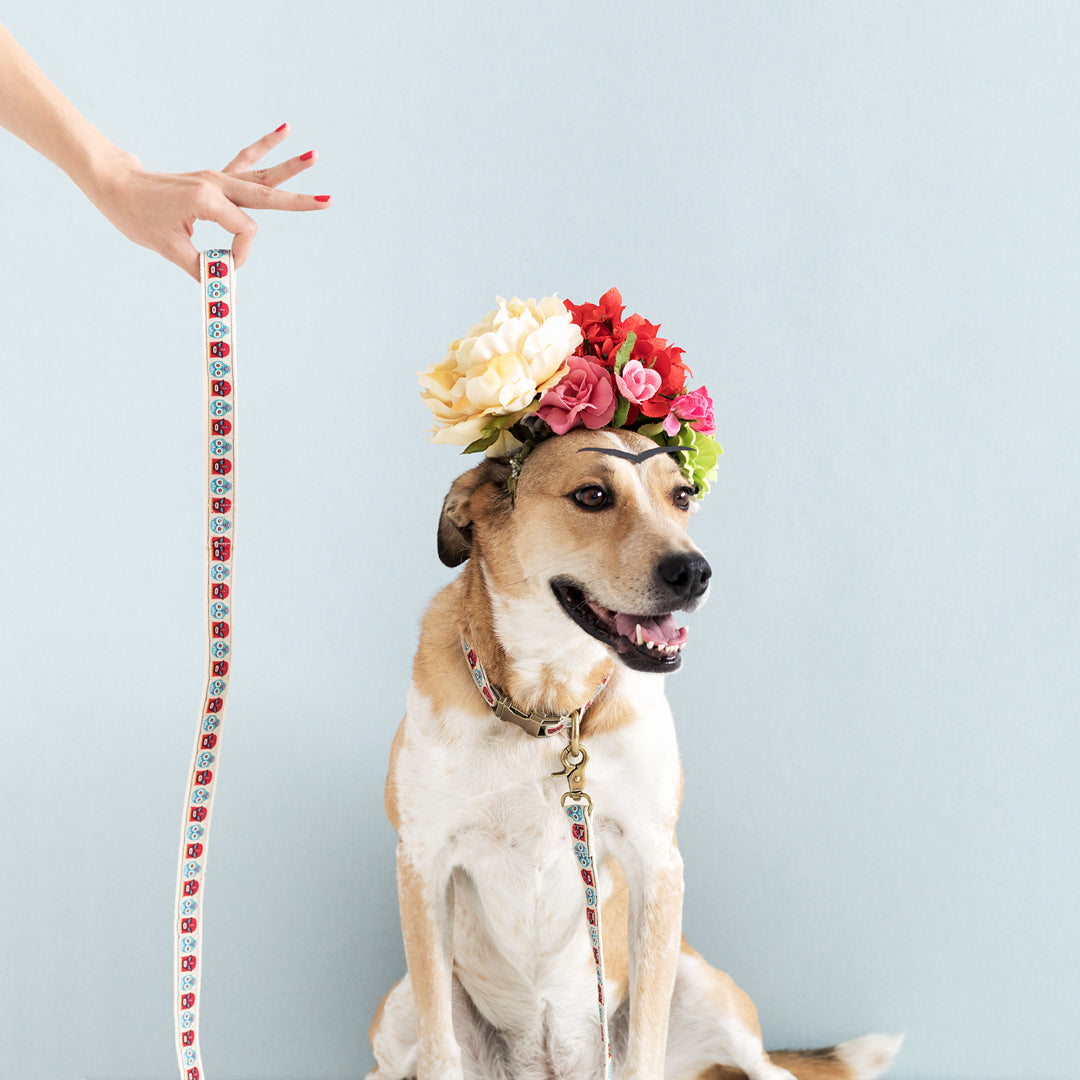 Frida dog leash from The Bark Co - 1