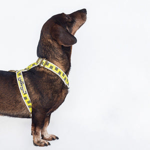 Elvis dog harness - The Bark Co. Handmade dog Harness