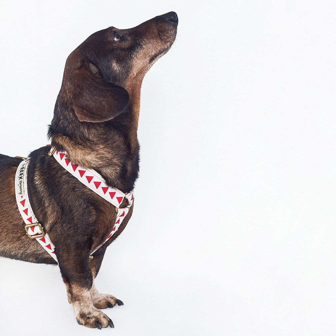 Wovoka dog harness - The Bark Co. Handmade dog Harness