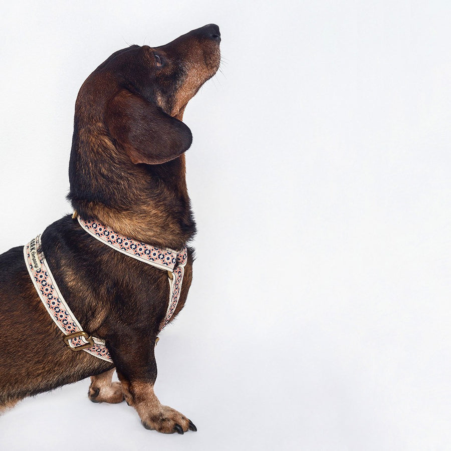 Lisboa Dog Harness - The Bark Co. Handmade dog Harness