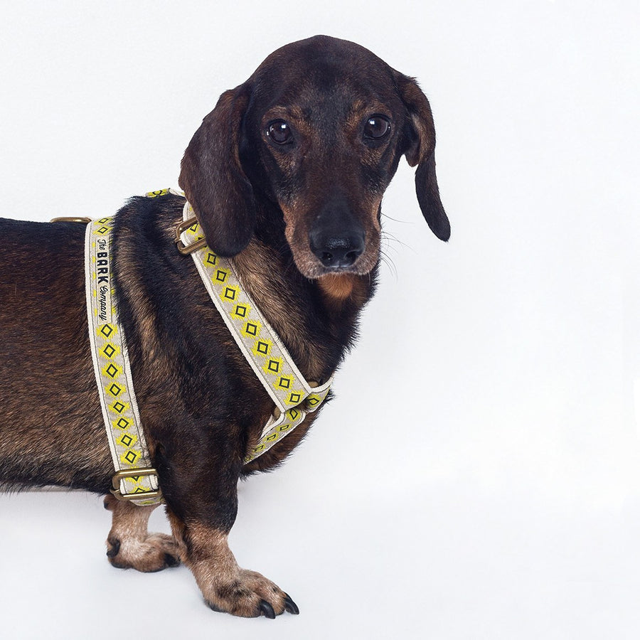 Chantico dog harness - The Bark Co. Handmade dog Harness